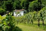Vakantiehuisje & Kampeerplek Casa Vigna
